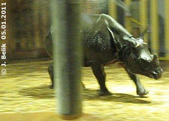 Sundari bei der Dusche, 5. Jänner 2011