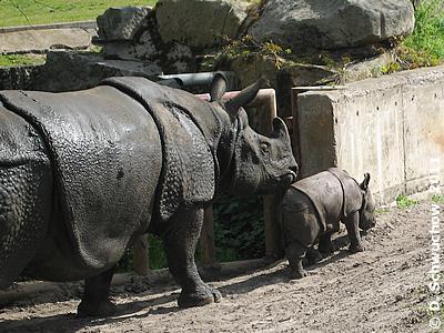 Betty mit Baby Manjula, 4. Mai 2008