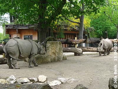 Jange und Sundari, 15. April 2011