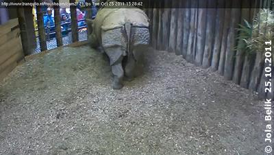 Saar, 25. Oktober 2011 (Screenshot von Webcam)