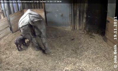 Saar und ihr Baby, sechs Stunden alt, 19. November 2011