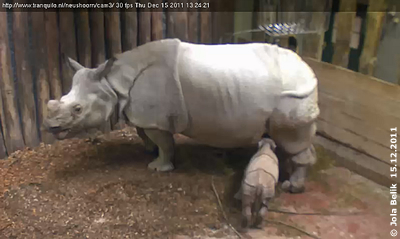 Baby Sunanda trinkt brav! 15. Dezember 2011 (Screenshot Webcam)