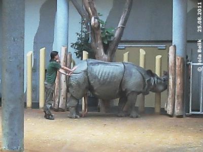 Desensibilisierung durch Berührung! Jange und Eveline, 25. August 2011