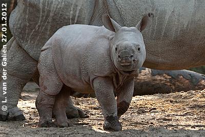 Die kleine Sunanda, 10 Wochen alt, 27. Jänner 2012