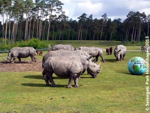 Nashörner Hodenhagen