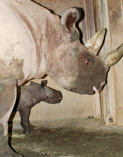 Nandi und Baby