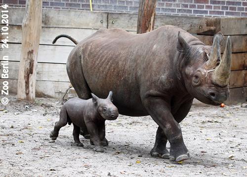 Kumi und Baby #2