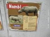 Nambi