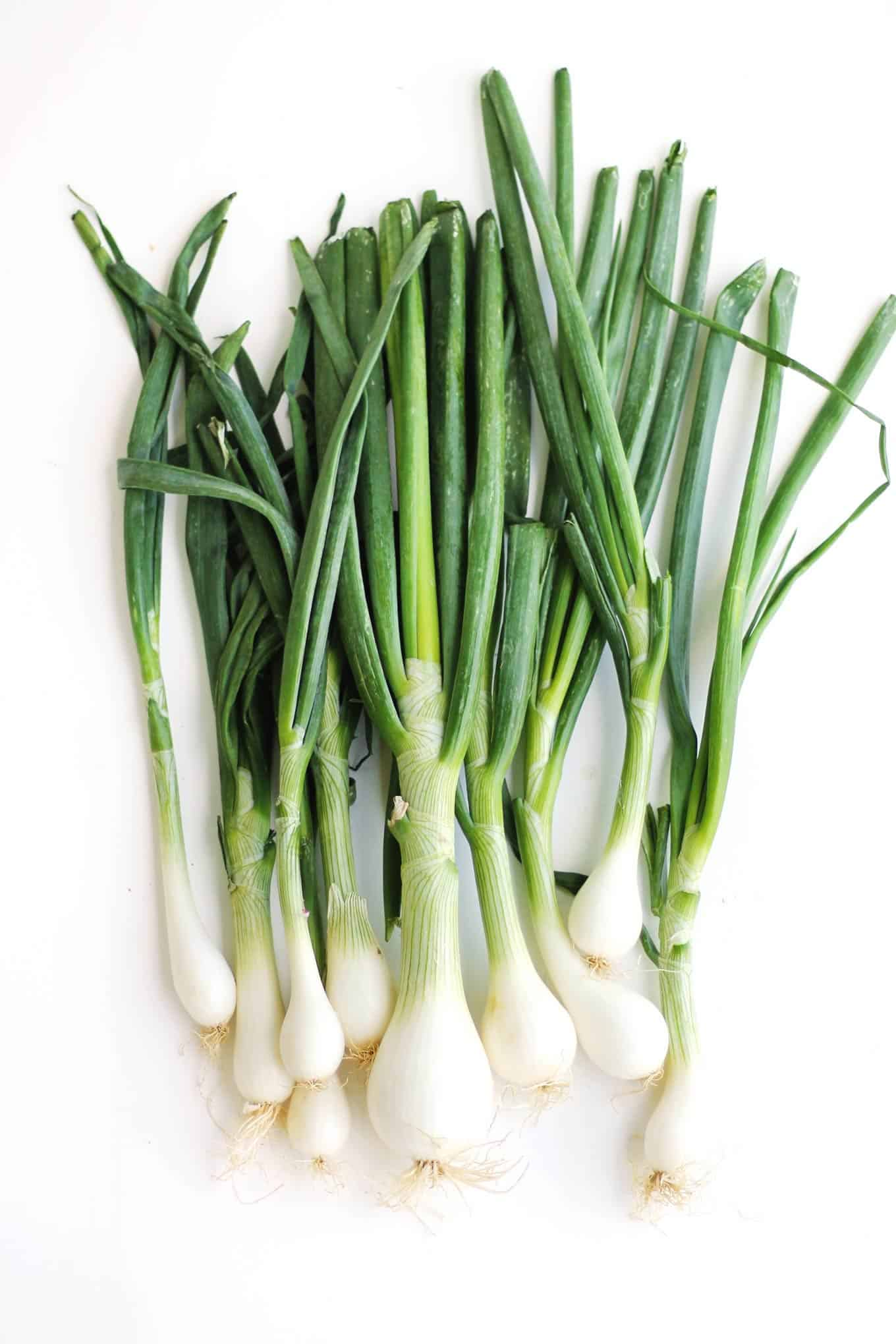 Spring onion photography