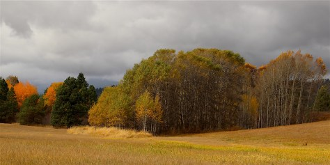 The Meadow off Elder Road