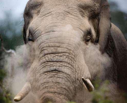 rhulani safaris img under pic 2