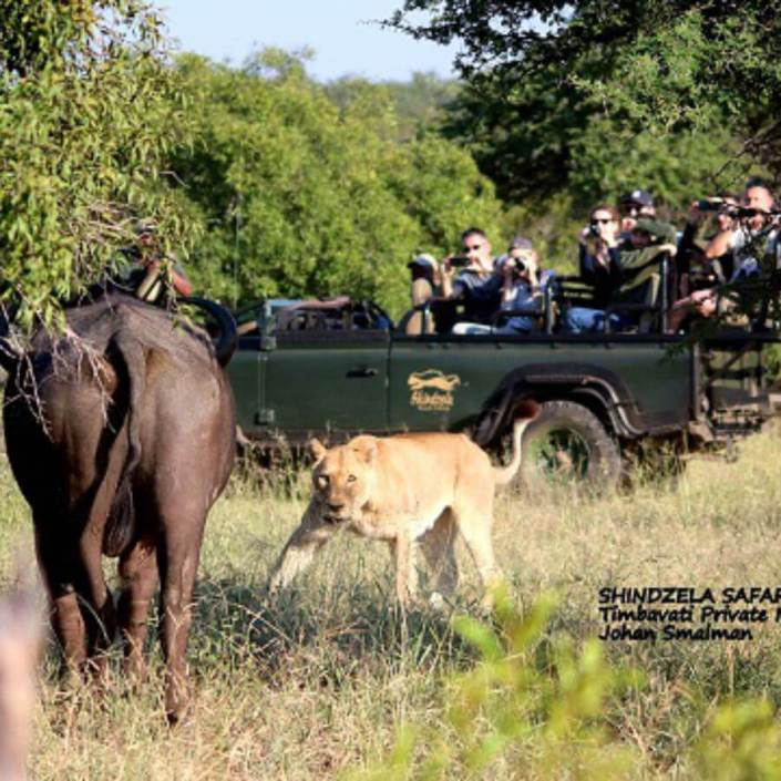 rhulani safaris tambavati big cat safaris img 1.4