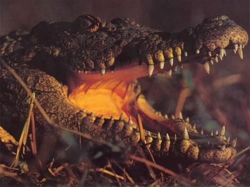 Le fauci minacciose di un coccodrillo.
