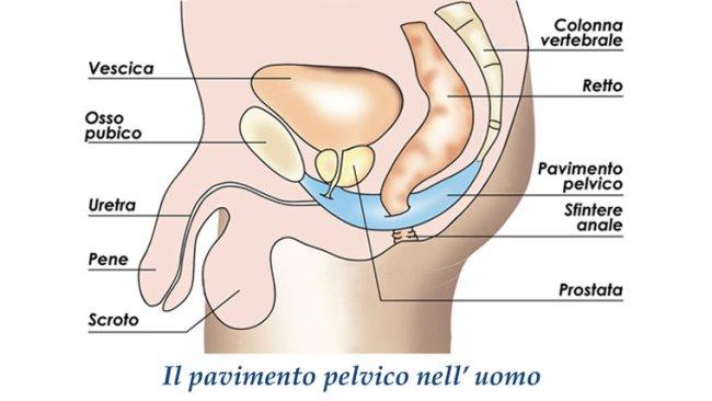dolore perineale zero