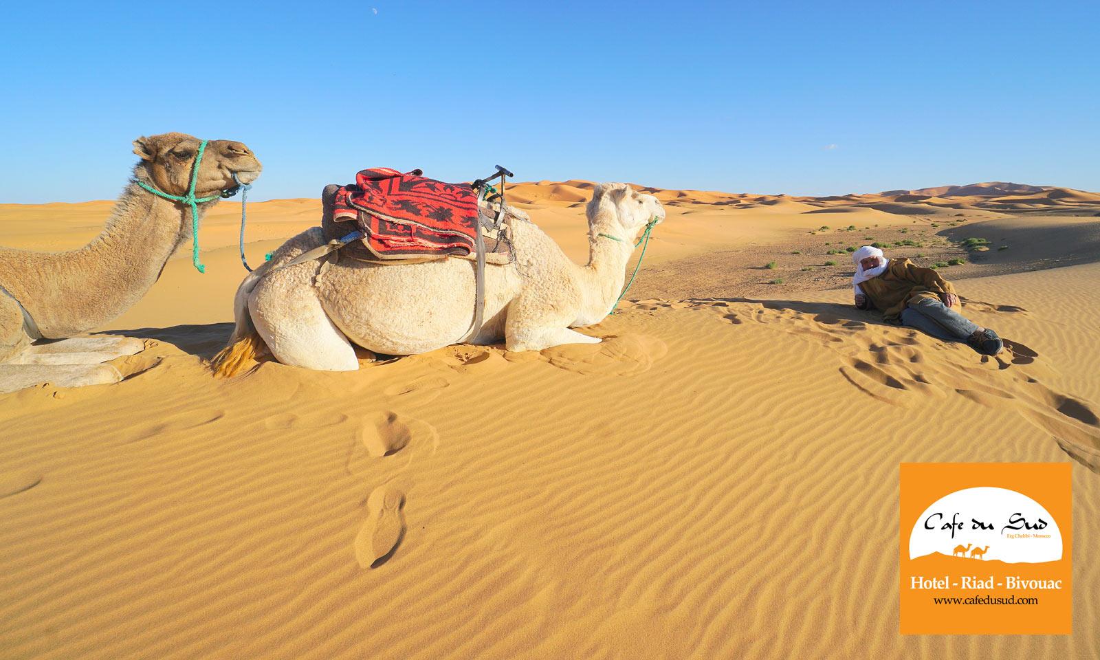 CAMEL TREKKING MOROCCO