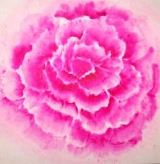 roos 50 bij 50 zonder zeefdruk 31