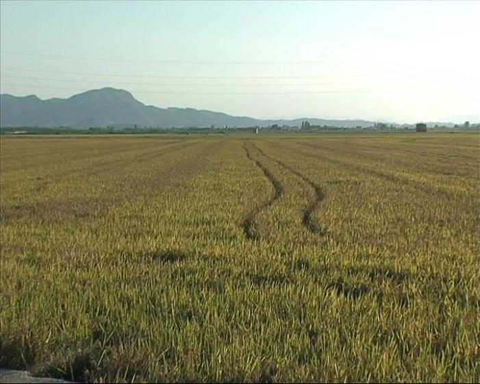 AVA-Asaja aconseguix que els arrossers puguen percebre les ajudes agroambientals fins 2020