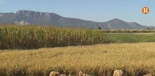 Cullera lamenta que Foment no  arregle els camins rurals de l'A-38