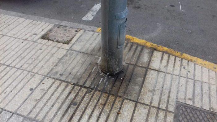 Ciutadans (Cs) d'Alzira aconseguix el consens per solucionar la insalubritat provocada per les deposicions dels animals