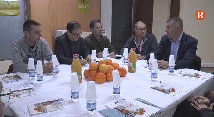 """El sector agrari d'Alzira lamenta  """"la inacció de l'Ajuntament d'Alzira davant els robatoris al camp"""""""