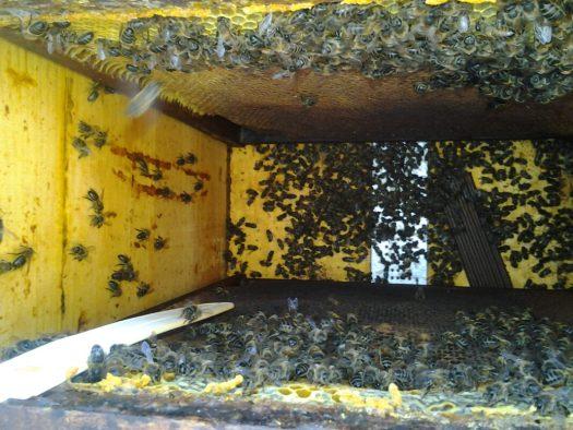 LA UNIÓ detecta els primers casos d'enverinament d'abelles per l'ús de plaguicides durant la floració dels fruiters