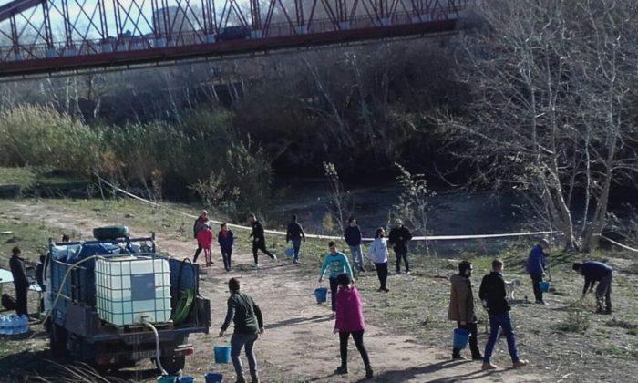 L'Ajuntament d'Alzira recupera el bosc de ribera del Xúquer