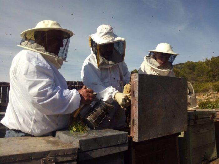 LA UNIÓ alerta dels perjudicis que suposa també per als cultius la desaparició del 50% de la cabanya apícola