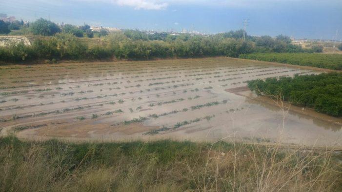 Les tempestes de pedra registrades avui tornen a causar danys en l'agricultura valenciana