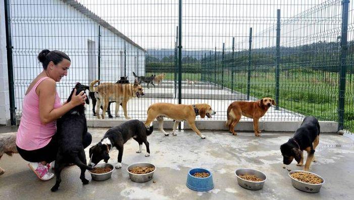L'Alcúdia participa, junt amb 34 pobles de la Ribera, en el primer refugi públic d'animals