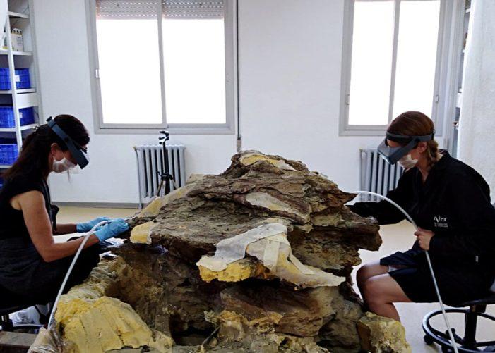 L'IVCR+i recupera la vèrtebra d'un dinosaure gegant apareguda al jaciment de Sant Antoni de la Vespa a Morella