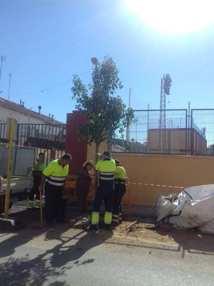 Alzira inicia el Pla d'Arbratge urbà