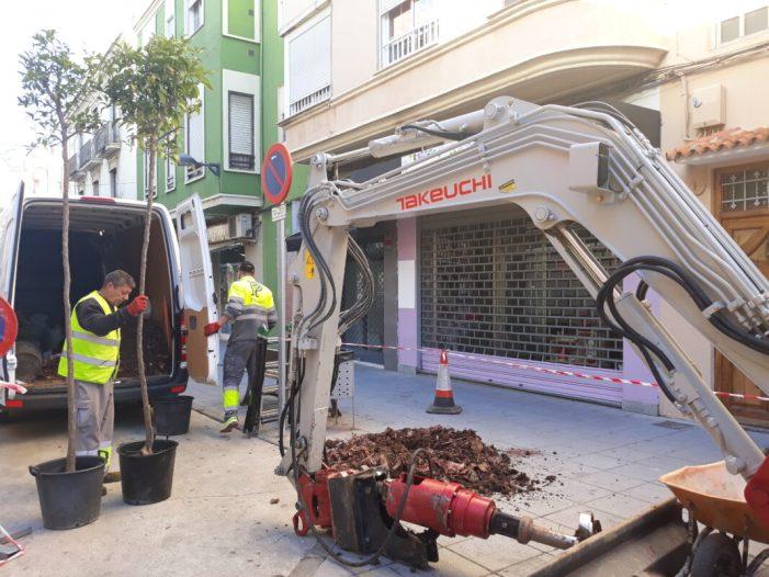 L'Ajuntament de Benifaió inicia la campanya de replantación d'arbrat en diversos punts verds del municipi