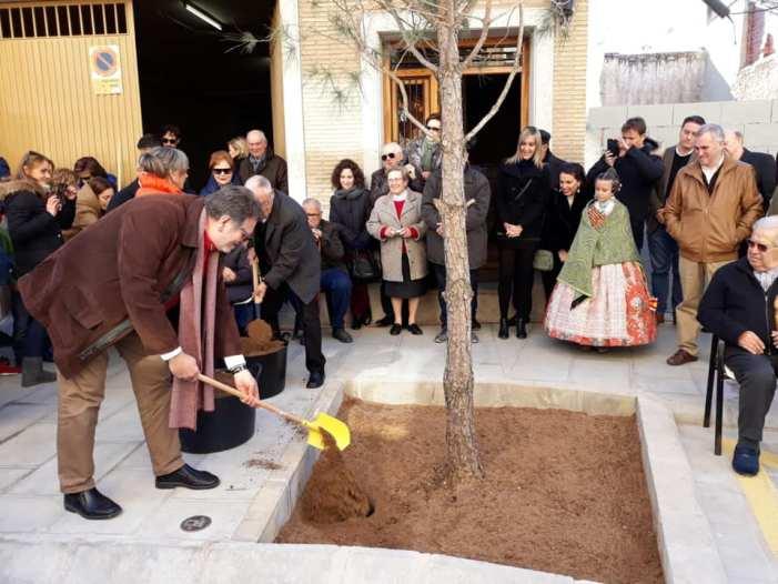 El carrer de la Mare de Déu de l'Olivar de Torrent recupera el seu tradicional pi