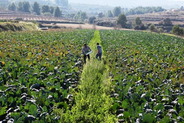 Agricultura convoca el Pla 2019 d'ajudes destinades a la subscripció d'assegurances agràries