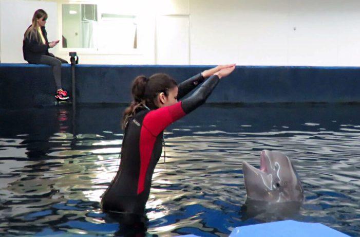 Les mares beluga ensenyen als seus fills un 'nom de família'