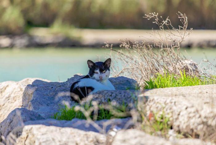 Cullera inicia l'esterilització de les colònies felines