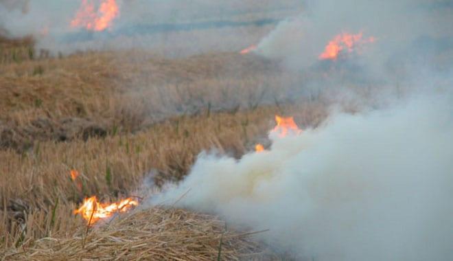 Cullera obri el període per a cremar la palla de l'arròs