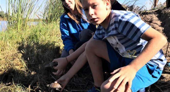 El Oceanogràfic solta deu tortugues autòctones en l'Albufera