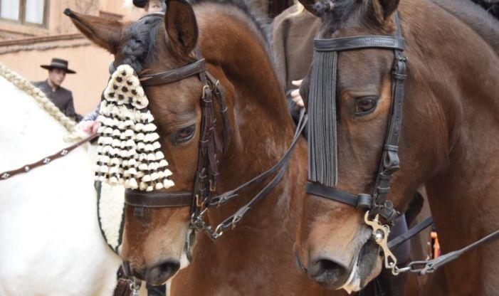 La Plaça dels Furs de Burjassot acull la tradicional benedicció d'animals per a celebrar la festivitat de sant Antoni Abat