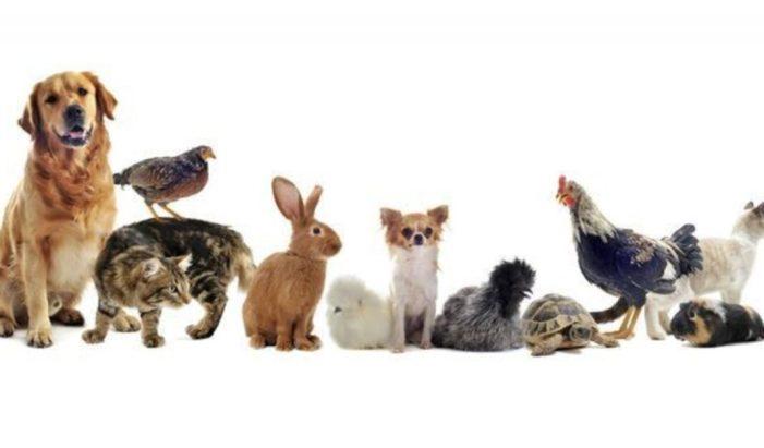 L'Alcúdia crearà una mesa de benestar animal