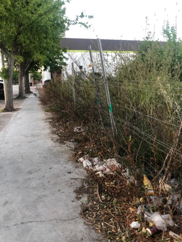 El PP denúncia la mala gestió en neteja urbana d'Alzira