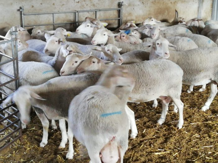LA UNIÓ presenta un recurs de reposició pel procediment emprat per la Generalitat en la presentació de sol·licituds d'ajudes per als sectors agropecuaris afectats per la Covid-19