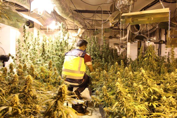 La Policia Nacional desmantella un sofisticat laboratori de marihuana i deté a cinc persones
