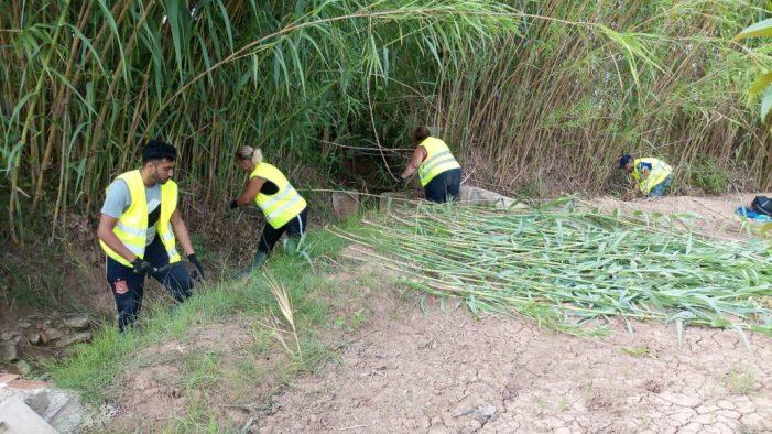 L'Ajuntament de Massalavés intensifica les labors de desbrossament i neteja dels camins del terme rural