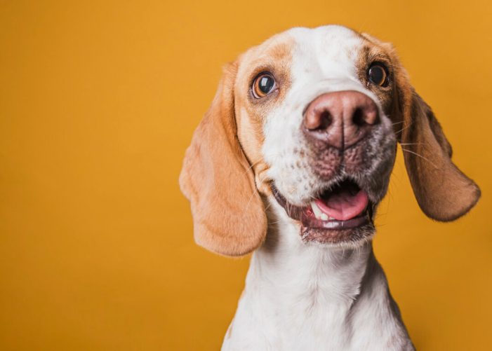 Càrcer censa el 80% dels gossos de la localitat per a combatre els excrements al carrer