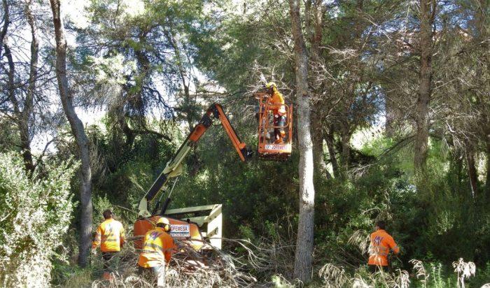 Ecologia urbana realitza més de 2.000 treballs de poda als carrers i jardins municipals durant el mes d´octubre a València
