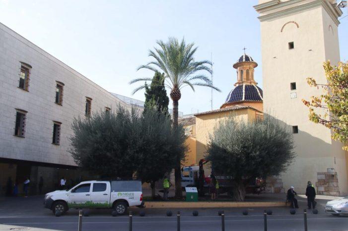 L'Ajuntament d'Alaquàs ha realitzat aquests dies treballs de poda i neteja en 113 palmeres del municipi