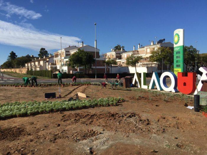 Alaquàs enjardina l'accés sud a la ciutat amb 2.000 plantes de flors aromàtiques