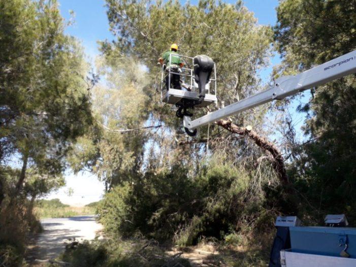 La Junta de Govern de l'Ajuntament de València aprova demà la versió definitiva del projecte del pla local de prevenció d'incendis forestals