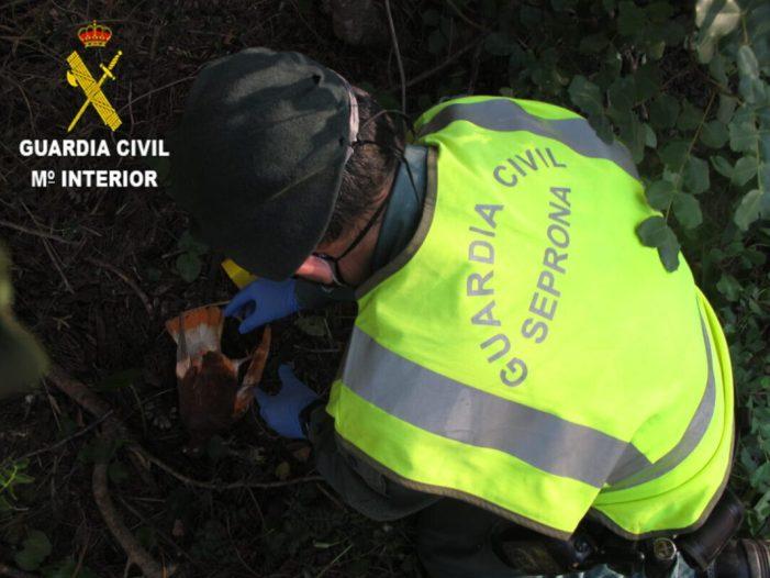 La Guàrdia Civil deté a un home que introduïa verí en coloms morts per a eliminar animals que el perjudicaven a Antella
